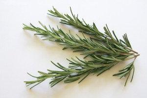 Rosemary Medium