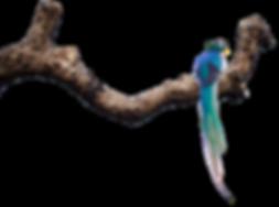 Guatemala Quetzal