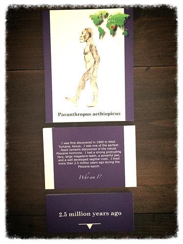 The Human Evolution Card Set