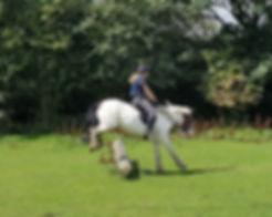 Adult horse camp