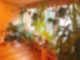 image1%20(4)_edited.jpg