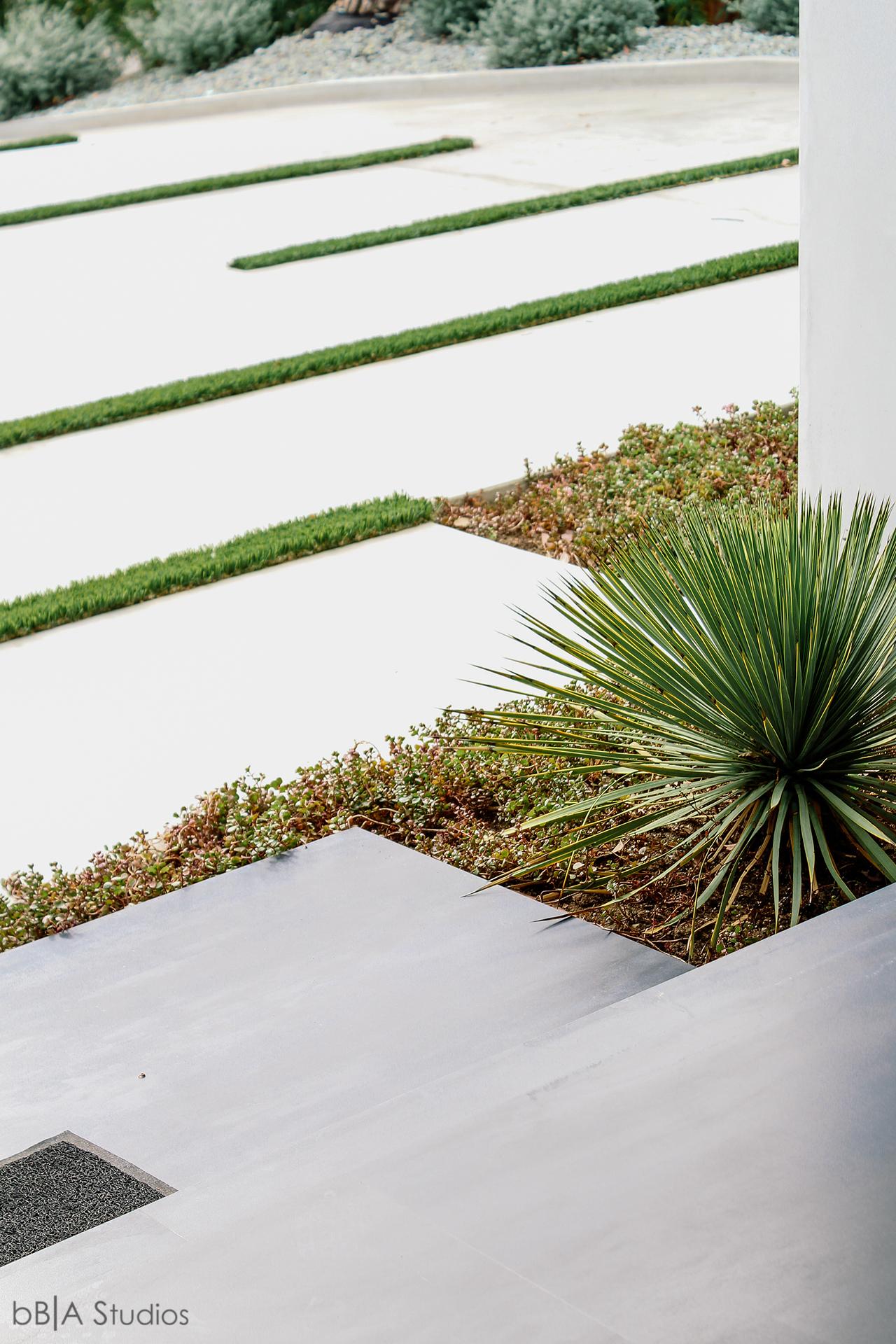 Detail of pavement plants