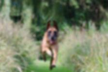 Running Dog Geriatric