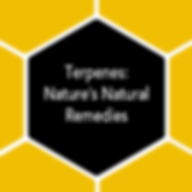 Terpenes-No-C---Hexagon-Boxes.png
