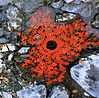ob_a295f6_land-art-andy-goldsworthy.jpg