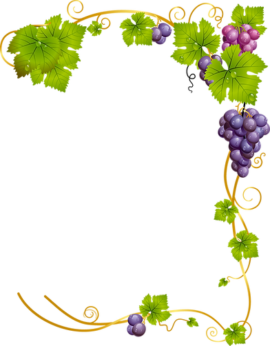 grape vine 2.png