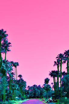Palms Road
