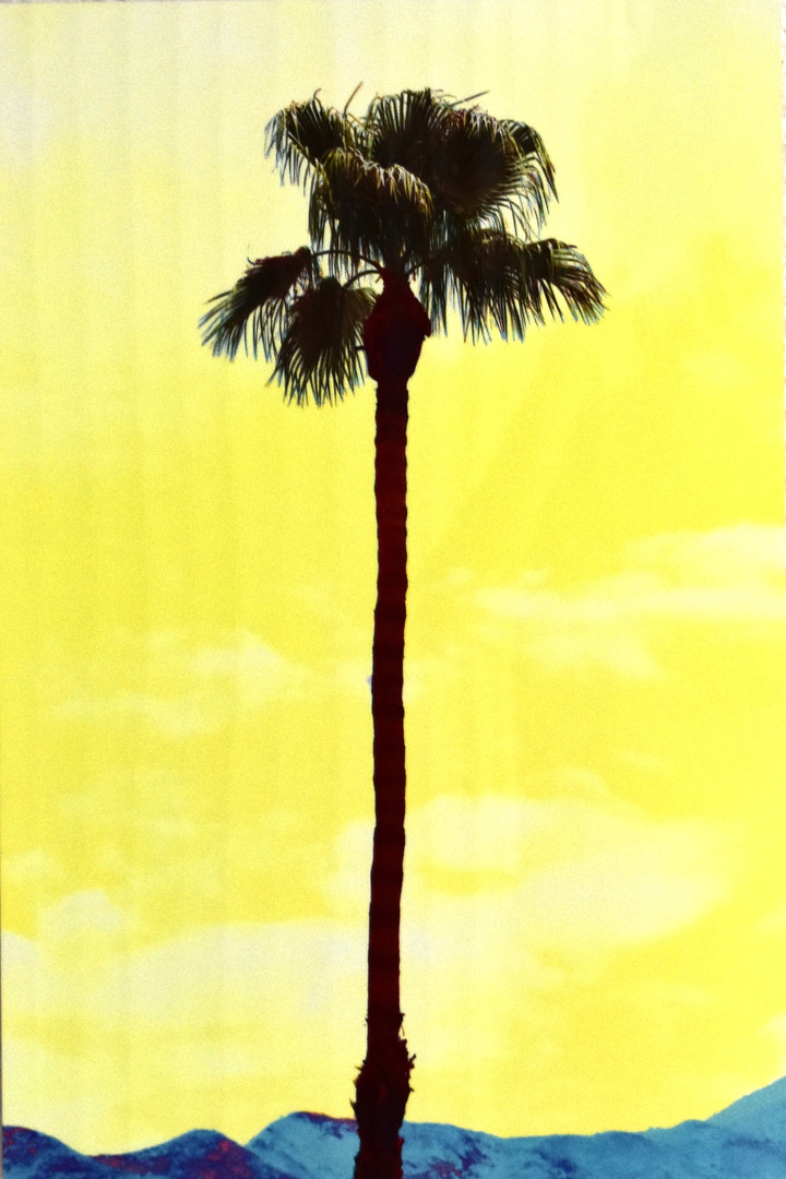 Yellow Palm