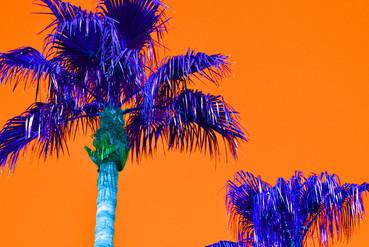 Orange Pop Art Palm