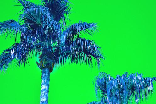 Green Pop Art Palms