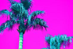 Purple Pop Art Palms