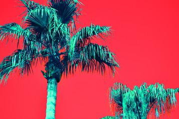 Red Pop Art Palms