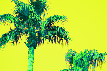 Yellow Pop Art Palms