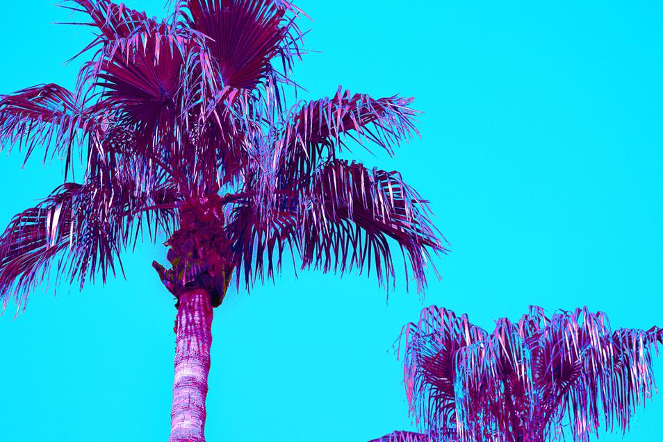Blue Pop Art Palms