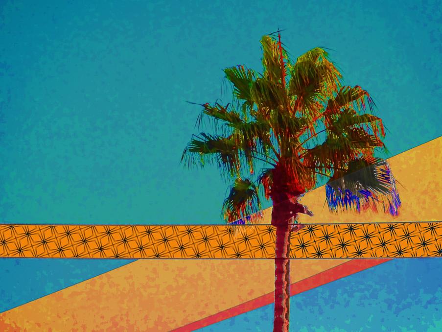 Midcentury Palm