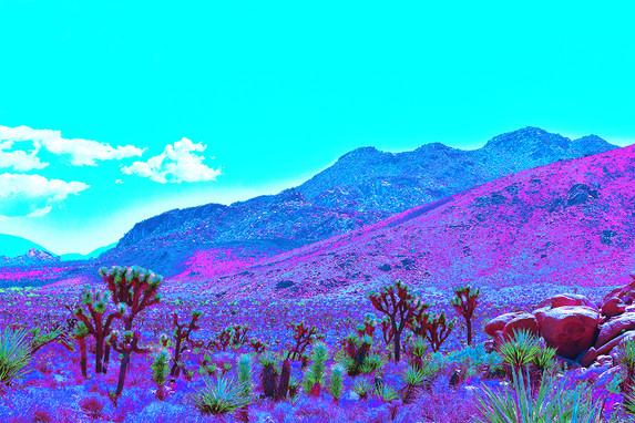 Joshua Tree Valley