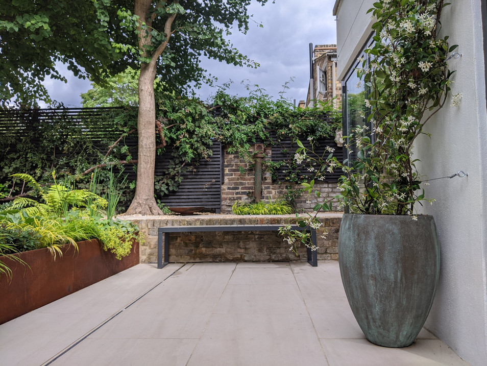 Taryn Ferris Garden Design - Corten Steel and Ginkgo Tree - De Beauvoir Town