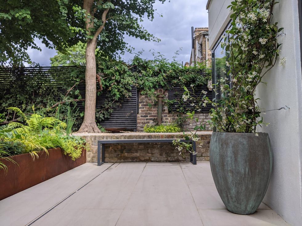 Taryn Ferris Garden Design - Corten Steel and Ginkgo Tree - De Beauvoir Town