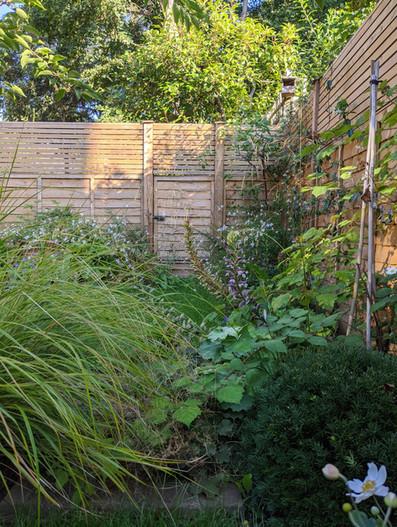 Taryn Ferris Garden Design - Secret Garden Door, Anemanthele lessoniania grass, Taxus baccata - Tuffnell Park Family Garden