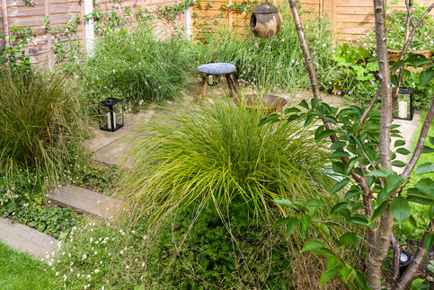 Taryn Ferris Garden Design - Anemanthele lessoniania grass and Erigeron karvinskianus ground cover - Tuffnell Park Family Garden