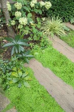 Taryn Ferris Garden Design - Soleirolia soleriolii, Carex 'Ice Dance', Hellborus niger, Alchemilla mollis, Hydrangea 'Little Lime'  - Tuffnell Park Family Garden