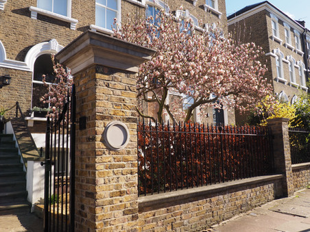 Taryn Ferris Garden Design - Front Garden Magnolia tree and Fagus purpurea in spring - Highbury Hill
