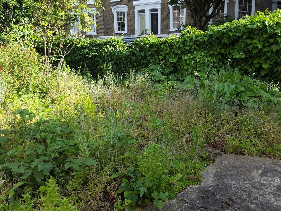 Taryn Ferris Garden Design - Before - Islington Front Garden