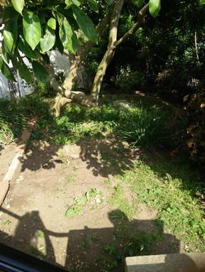 Taryn Ferris Garden Design - Front Garden Before Photograph - Highbury Hill