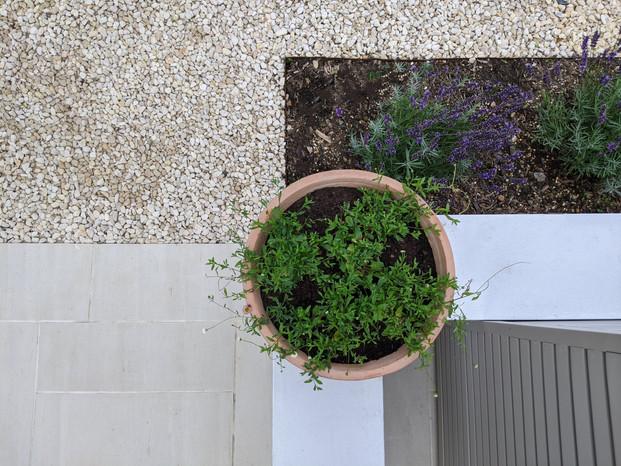 Taryn Ferris Garden Design - Detail - Porcelain, Gravel, Planting, Terracotta Pot  - Islington Front Garden