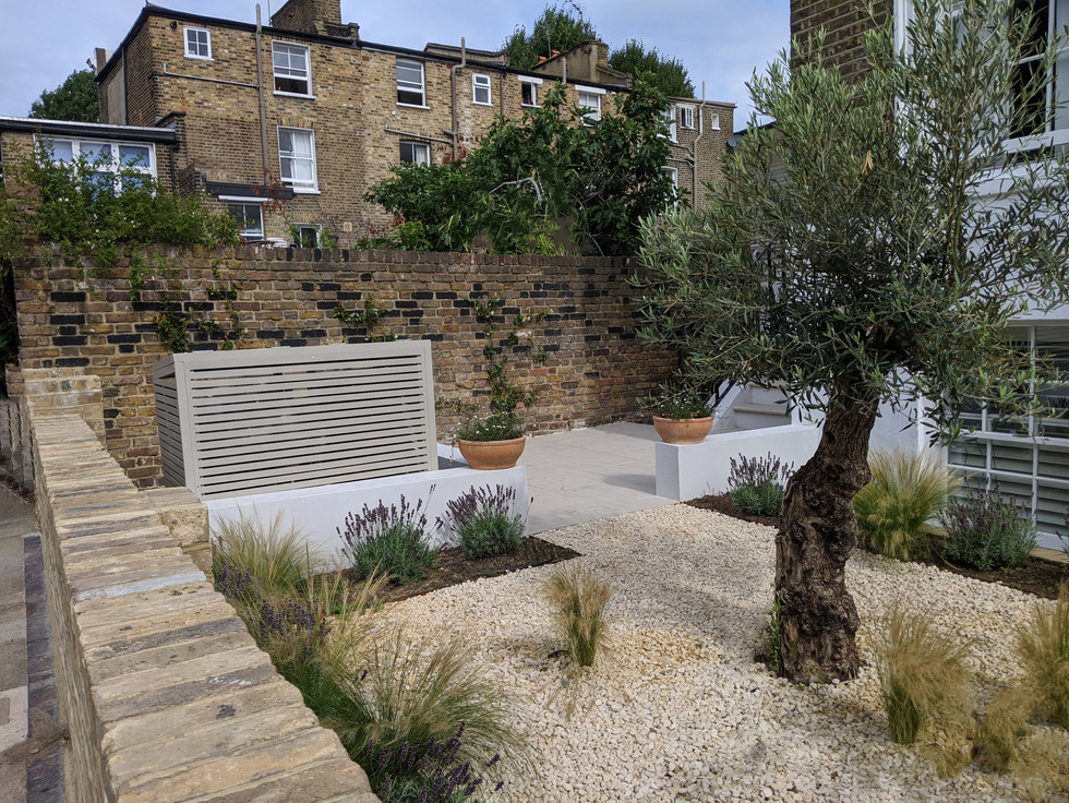 Taryn Ferris Garden Design - Stipa tenuissima, Olive Tree, and Lavender - Islington Front Garden