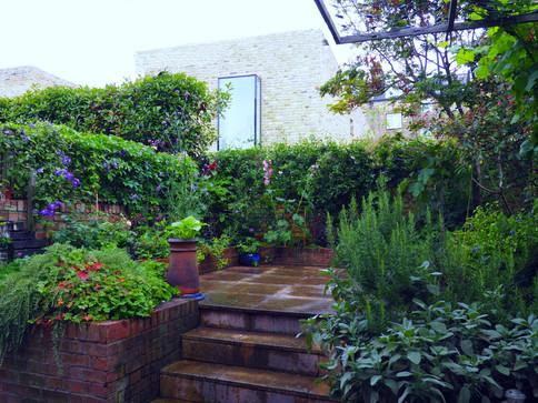 Taryn Ferris Garden Design - Planting Refresh - Finsbury Park Courtyard Garden