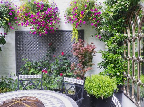 Taryn Ferris Garden Design - Climbing Trachelospermum, Painted Trellis, and Rosa 'Love Knot' - City Road Courtyard Garden