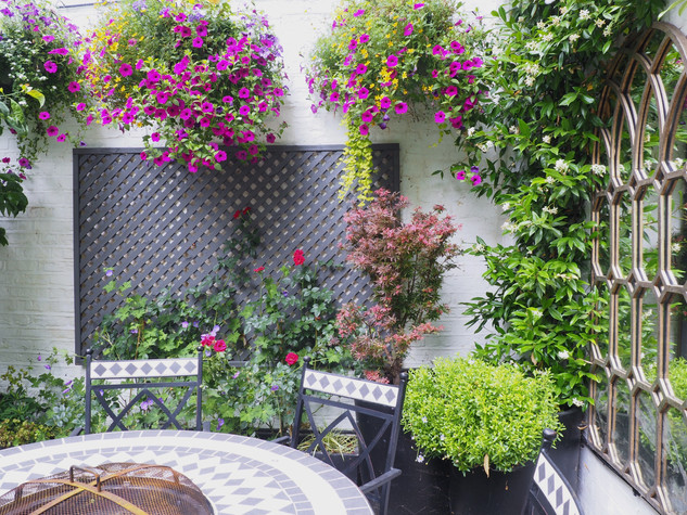 Taryn Ferris Garden Design - Climbing Trachelospermum, Painted Trellis, and Rosa 'Love Knot' - City Road Courtyard Garden