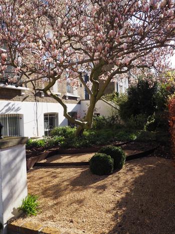 Taryn Ferris Garden Design - Front Garden - Highbury Hill