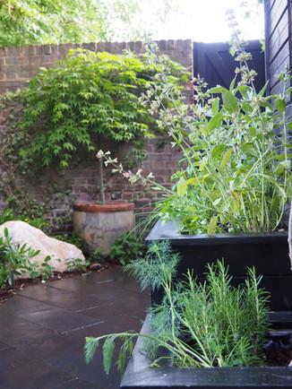 Taryn Ferris Garden Design - Purbeck Stone Boulders, raised herb planters and Acer in glazed pot - Victoria Park Garden Planting