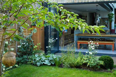 Taryn Ferris Garden Design - Prunus x yedoensis, Taxus baccata, Anemone x hybrida 'Honorine Jobert', Luzula nivea, Brunnera 'Jack Frost', Iris foetidissima  - Tuffnell Park Family Garden