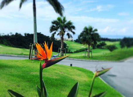 PGMゴルフリゾート沖縄にて