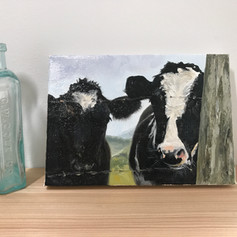 Marin Cows | sold