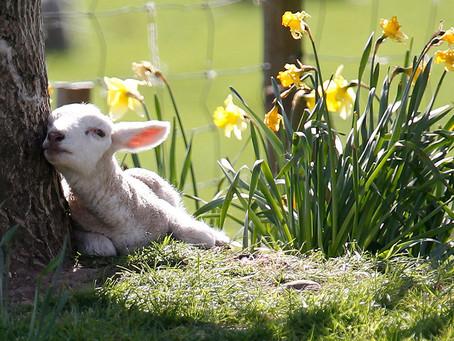 Spring Enrichment: Registration Now Open!