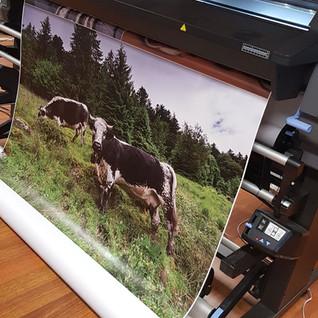 décoration photographie Illico perso personnalisation tous supports la bresse communication visuelle hautes vosges