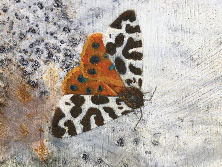 Tiger and Puss Moth