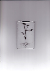 Scan image; Resin and ink drawing