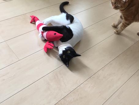 Column:猫はなぜ避妊手術を受けるの?