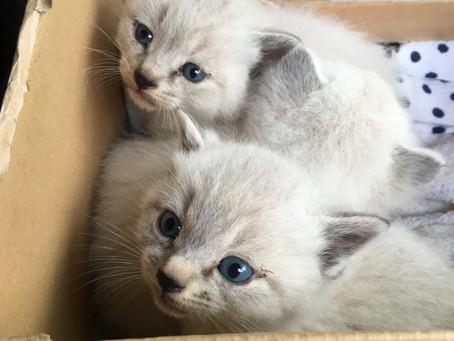 子猫ちゃんたちを保護しました