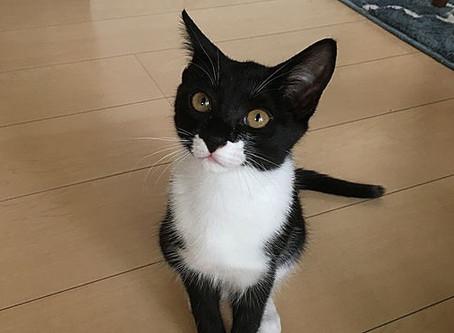 Column:猫の目について