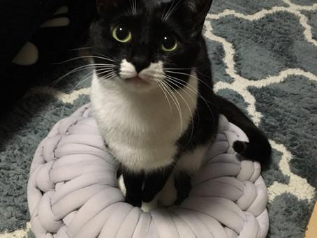 意外と分かってない!?猫のおトイレ事情。