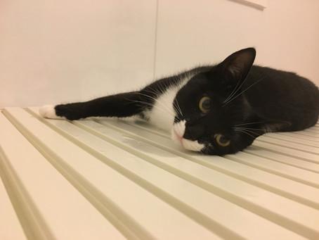 Column:猫とお風呂について