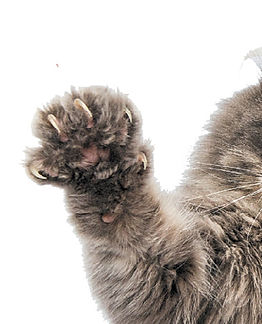 An-excited-cat-with-his-claws-out.jpg