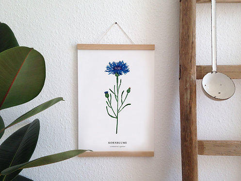 "Botanik Kunstdruck ""Kornblume"""