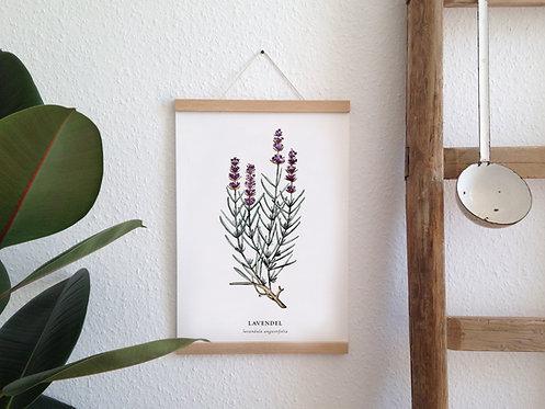 "Botanik Kunstdruck ""Lavendel"""